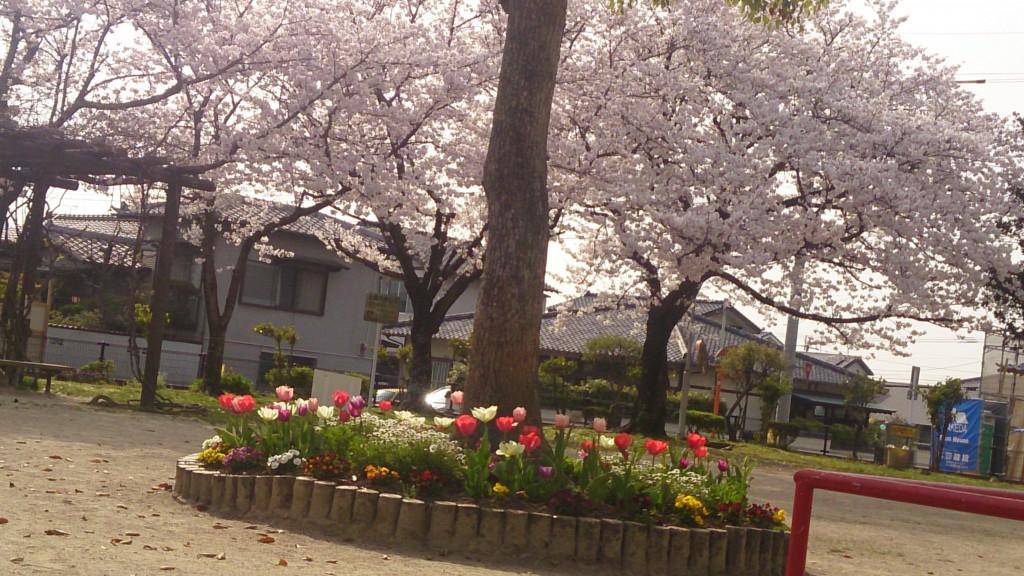 桜の公園15.03.30